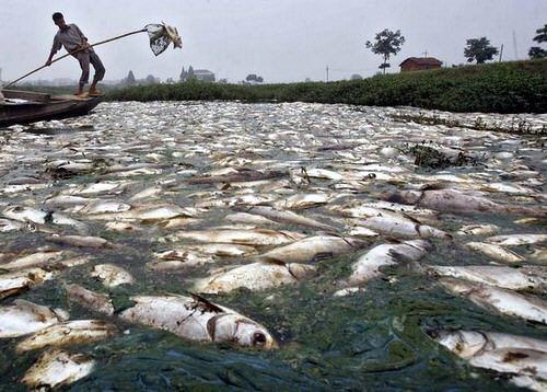 Denuncia: El río más sucio de la tierra.